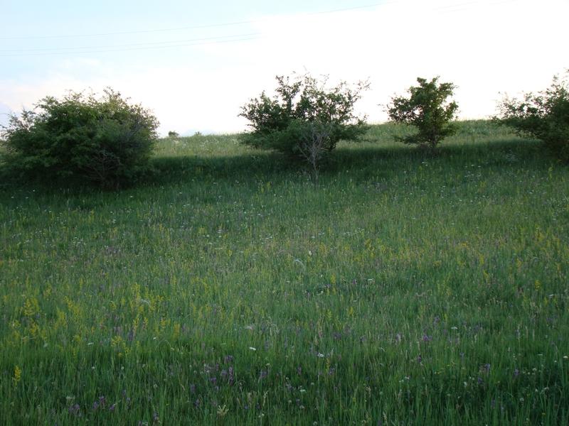 flora-fauna-cheile-turzii3