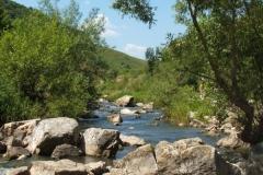 flora-fauna-cheile-turzii11