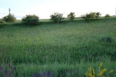 flora-fauna-cheile-turzii2