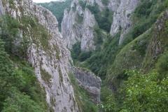 flora-fauna-cheile-turzii8