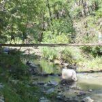 Pod peste paraul Hasdate