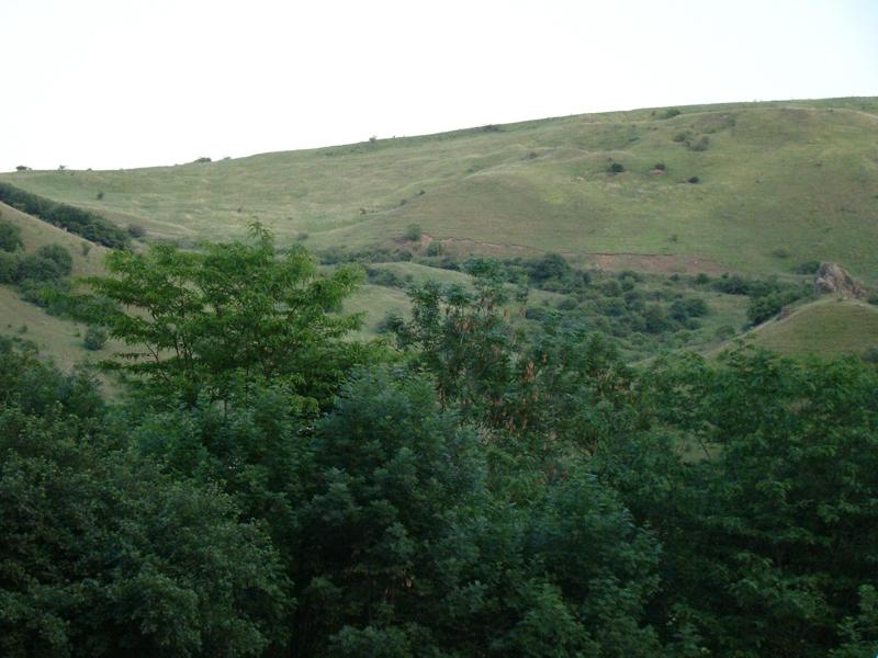 flora-fauna-cheile-turzii4
