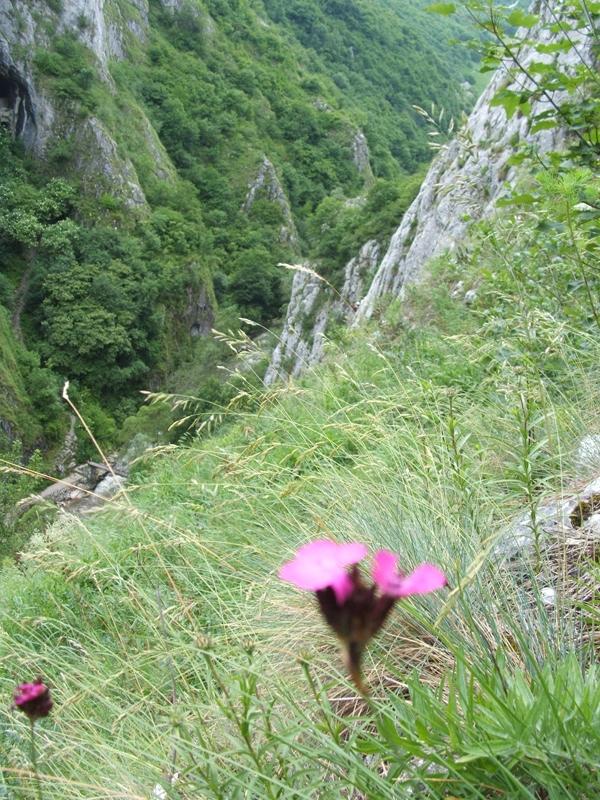 flora-fauna-cheile-turzii9