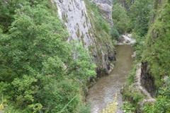 flora-fauna-cheile-turzii7